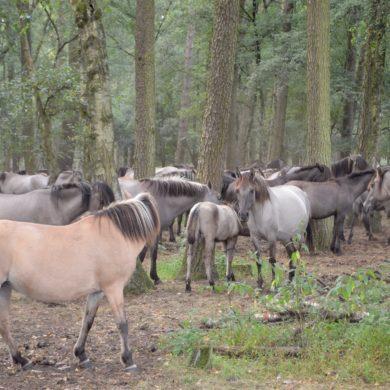 Familienausflug: Wildpferdefang