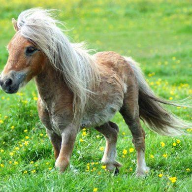 Familienausflug: Ponyreiten